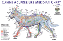 Acupressure Meridian Chart, Canine