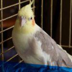 bird-feature