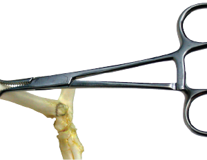 Bone Clamp, X-Small