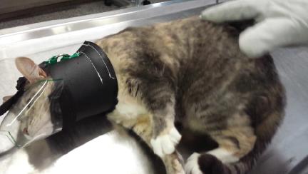Transparent cat tail