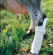 Bos Lower Leg Splint, Cow, Large