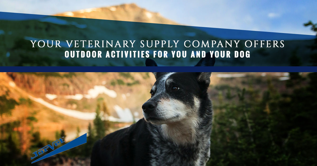 Outdoor Activities for you and your dog